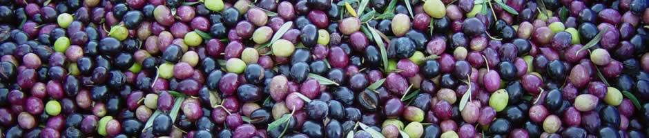olives-banner-02.jpg