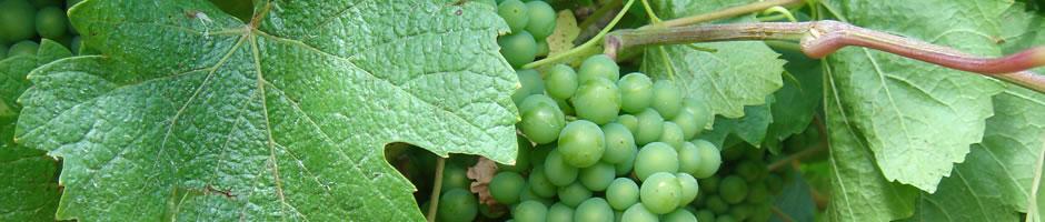 our-wines-slide-1.jpg