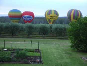 balloons taking off from the vineyard