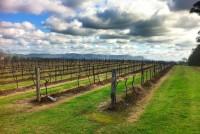 Adina Vineyard Hunter valley